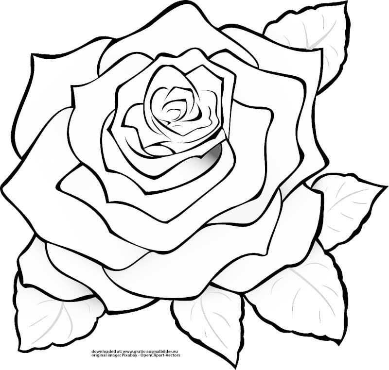 rose  gratis ausmalbild