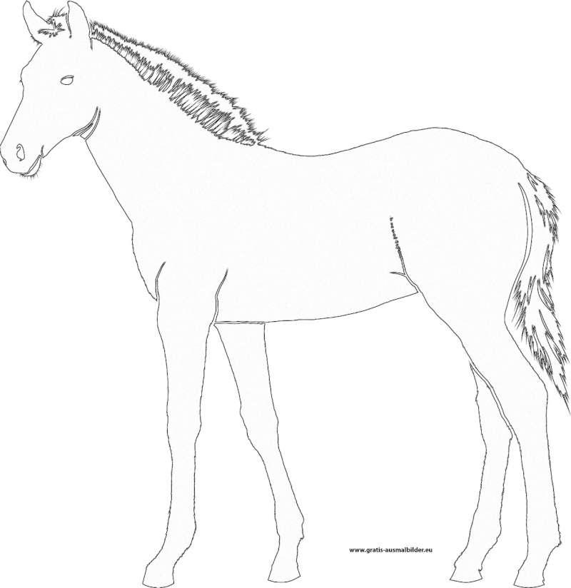 pferd  gratis ausmalbild