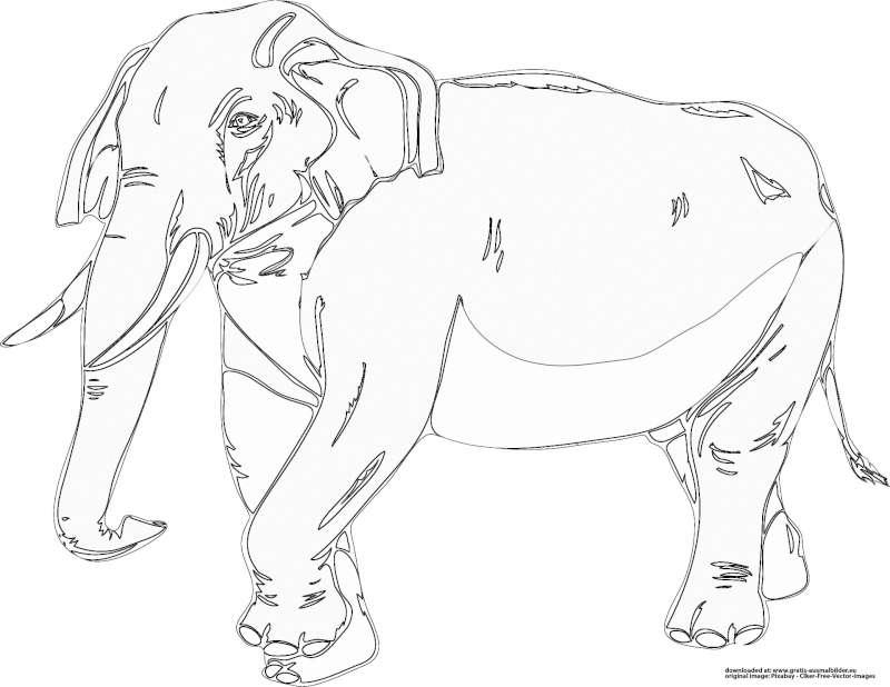 ausmalbilder tiere elefant - x13 ein bild zeichnen