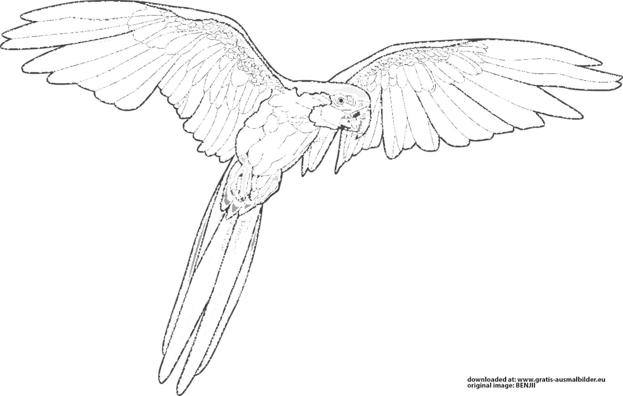 ▷ Papagei - Gratis Ausmalbild