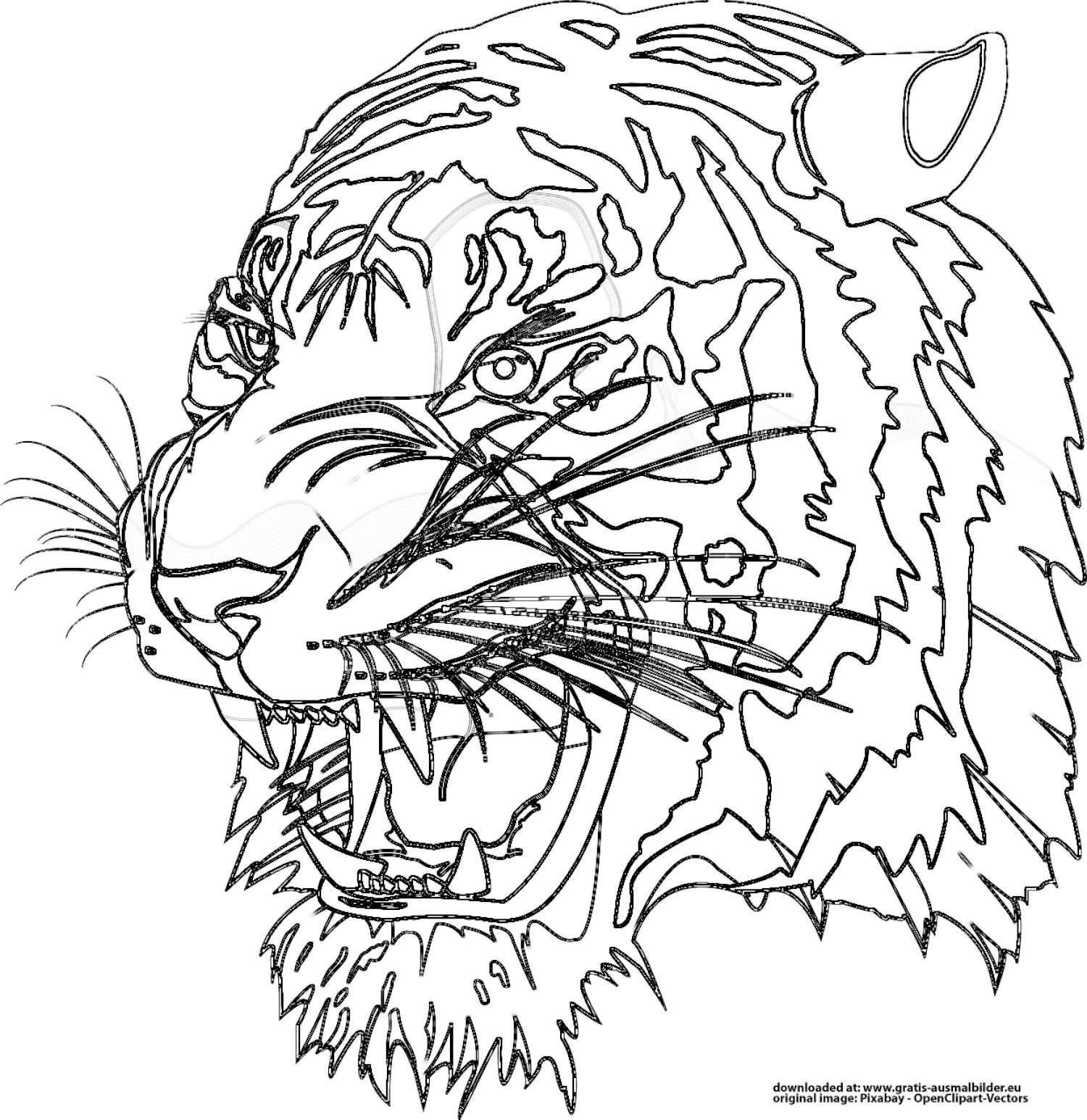 Ausmalbilder Raubkatzen