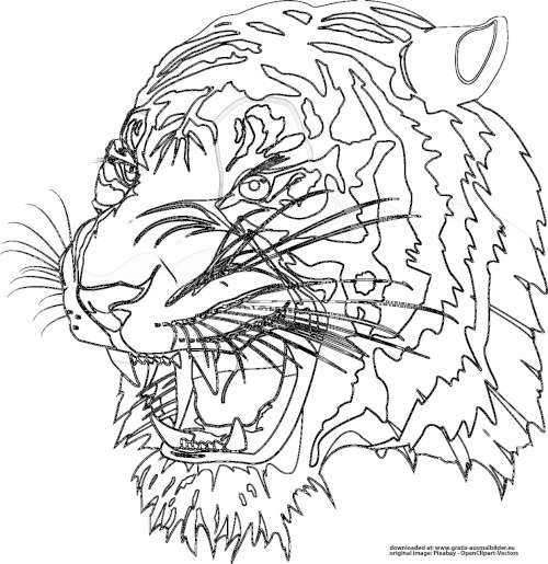 37 Tiger Zum Ausmalen Besten Bilder Von Ausmalbilder
