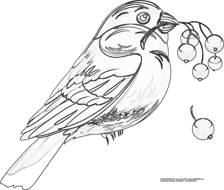 vogel  gratis ausmalbild