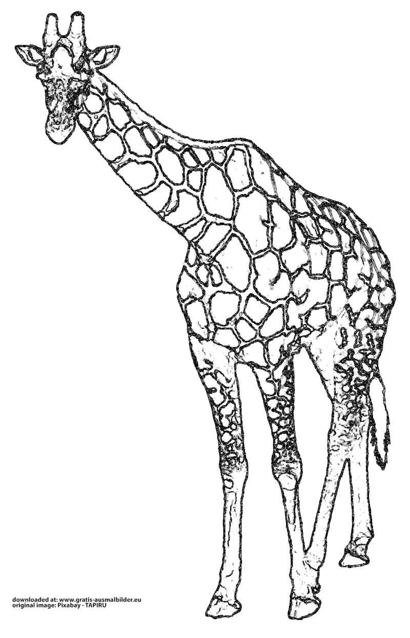 giraffe - gratis ausmalbild