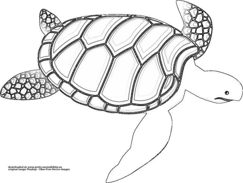 schlidkröte  gratis ausmalbild