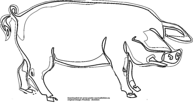 schwein  gratis ausmalbild
